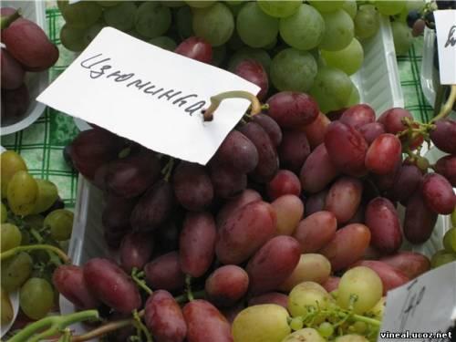 члены клуба виноградарей и виноделов Приднепровья,дегустация винограда,домашний виноград