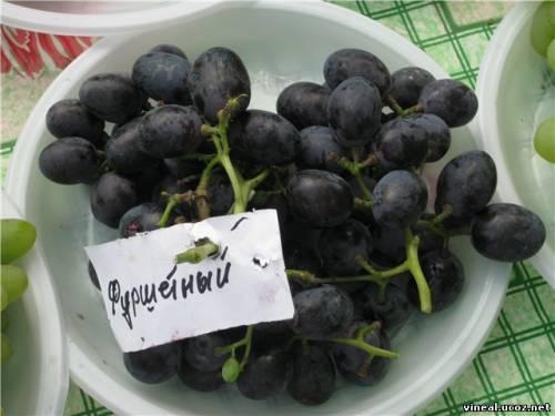 сорт винограда,Изюминка,виноград,гроздья винограда