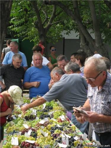члены клуба виноградарей Приднепровья,дегустация винограда,виноград,сорта винограда